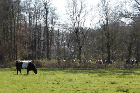 Lakenvelders - Metrbroekbos - (foto Kunera Fokkens)