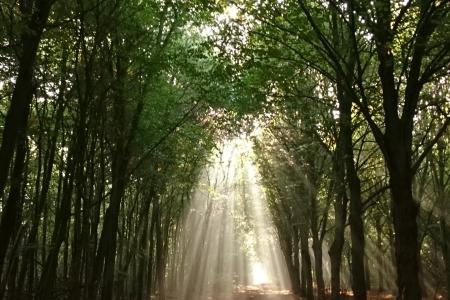Zon door de bomen - Luken Hulsker