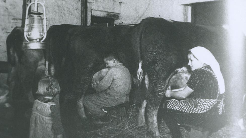 <p>Het melken van koeien in de schuur bij het licht van een lantaarn. – Foto: maker onbekend, collectie Streekhistorisch Centrum Stadskanaal</p>